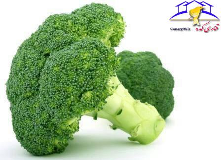 ویتامین برای قناری مکمل قناری کلم بروکلی قناری کلم بروکلی کلسیم قناری قناری کده قناری فواید کلم بروکلی برای قناری فواید کلم بروکلی سایت قناری تغذیه قناری Broccoli Benefits of Broccoli for Canaries