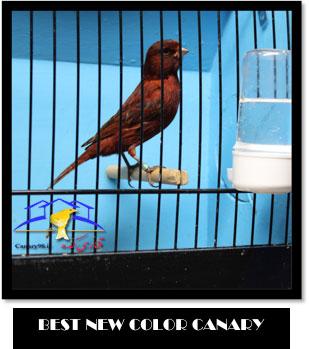 نمایشگاه قناری خارج از کشور نمایشگاه قناری جدید نمایشگاه قناری آمریکا نمایشگاه قناری 2015 نمایشگاه قناری 2014 نمایشگاه قناری نمایشگاه national bird cage show قناری های برتر قناری عکس های نمایشگاه قناری عکس قناری های برتر نمایشگاه عکس قناری سایت قناری پرورش قناری national bird cage show