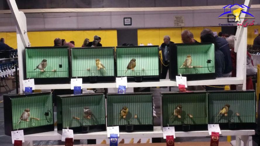 عکس های نمایشگاه ملی پرندگان زینتی کانادا ۲۰۱۶