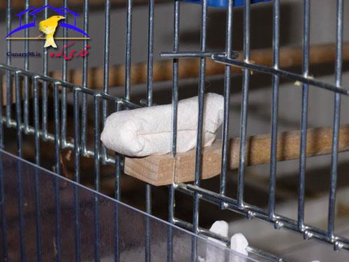 نشانه های شپشک در قناری و تست آن قناری شناخت شپشک قناری شپشک قناری شپشک شپش قناری راه های شپشک های قناری راه های پیدا کردن شپشک ها قناری راه های پیدا کردن شپشک حمله شپشک ها به پرنده ها تست شپش قناری پیدا کردن شپشک قناری پیدا کردن شپشک پرورش قناری بیماری شپشک قناری Symptoms of scale in the Canary and testing canary