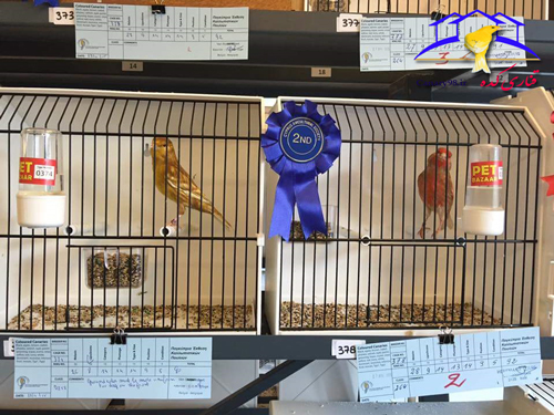 نمایشگاه های قناری در خارج از کشور نمایشگاه های قناری در اروپا نمایشگاه های قناری نمایشگاه های حرفه ای قناری نمایشگاه قناری اروپا نمایشگاه قناری 2015 نمایشگاه قناری نمایشگاه پرندگان زینتی قناری عکس های نمایشگاه های قناری عکس قناری سایت قناری 31st pancyprian bird exhibition