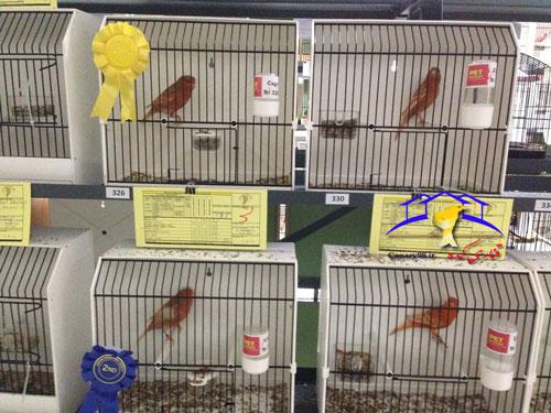 نمایشگاه قناری قبرس نمایشگاه قناری اروپا نمایشگاه قناری گالری عکس قناری قناری عکس های نمایشگاه قناری عکس قناری سایت قناری canary photo canary exhibition canary